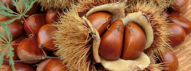chestnuts.JPG
