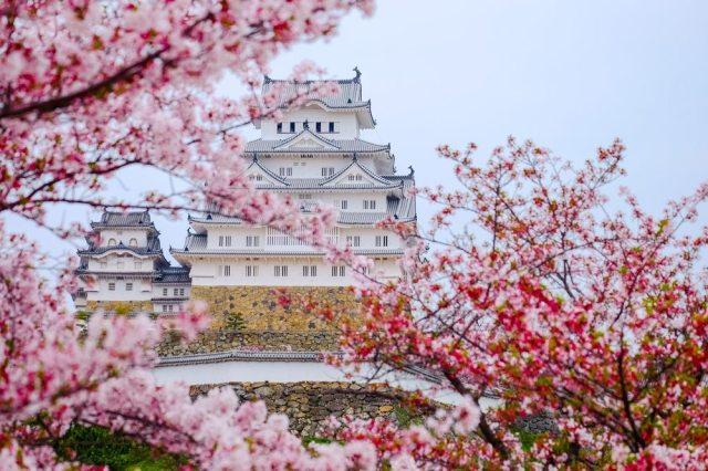 osaka castle cherry blossoms.jpg