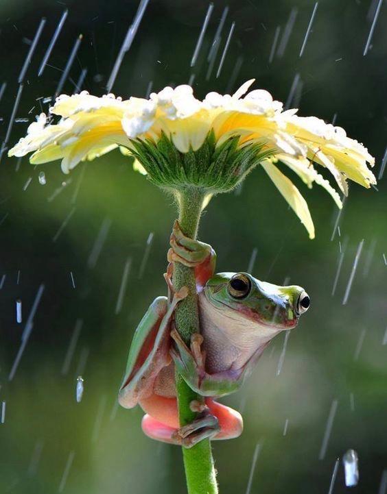 frog flower rain 1