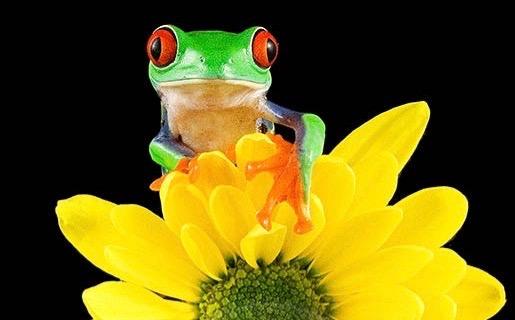 daisy frog.jpg