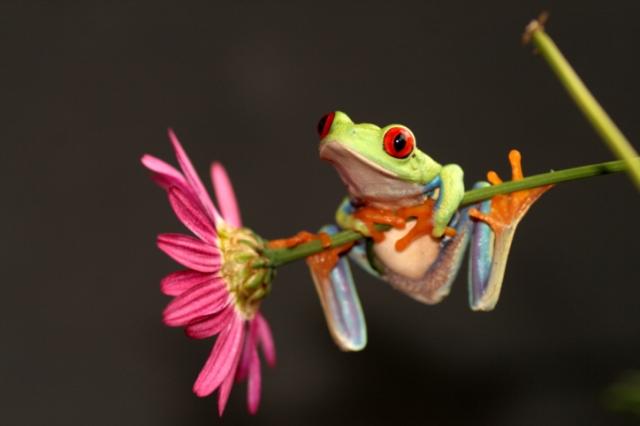 flower frog.jpg